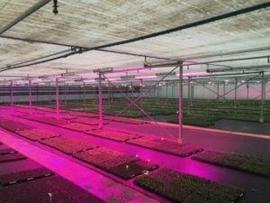 Horticultural Installations