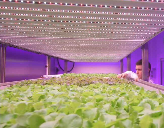Why we need vertical farms