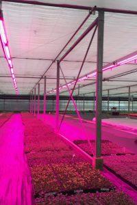 LED lighting horticulture