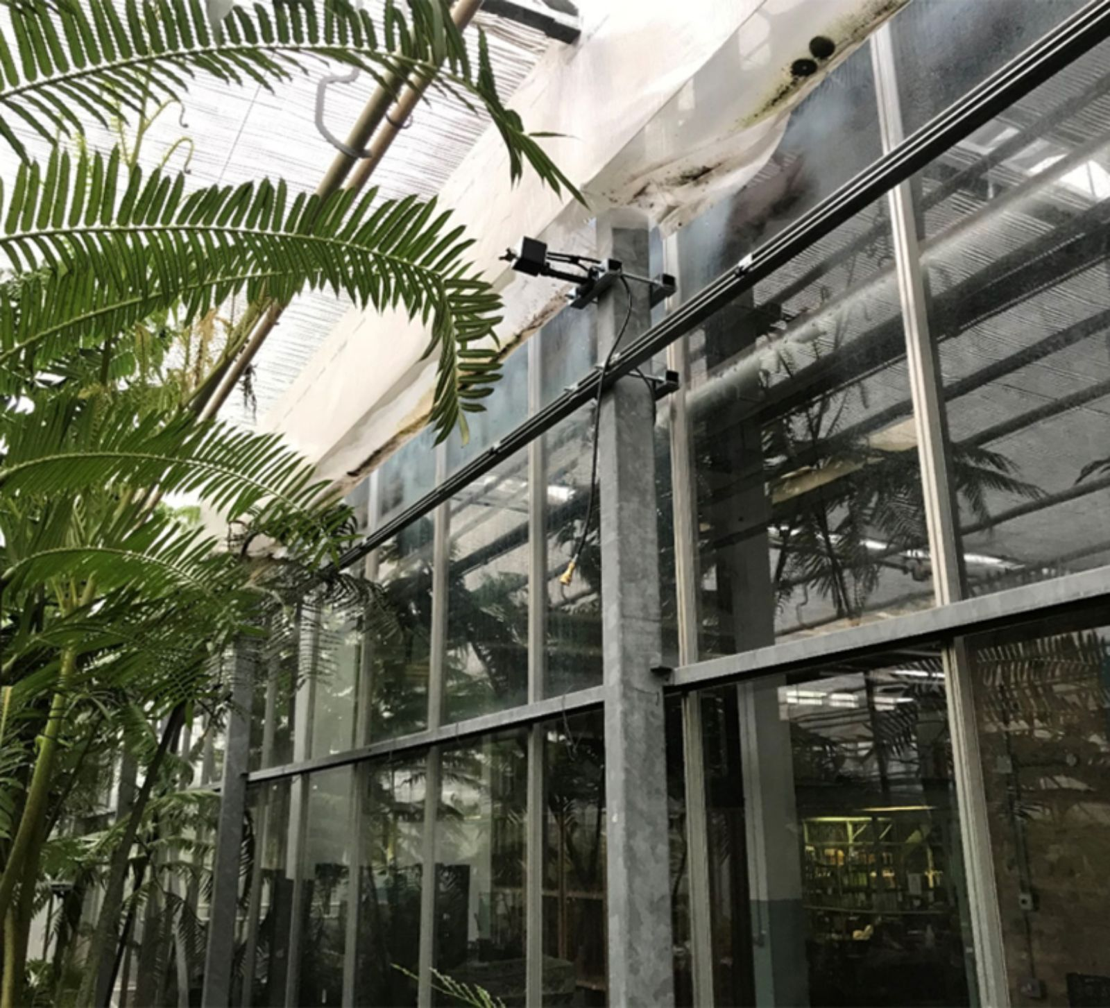 Kew gardens fogging system